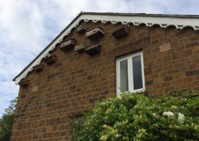 Swifts Bird Box June 2018